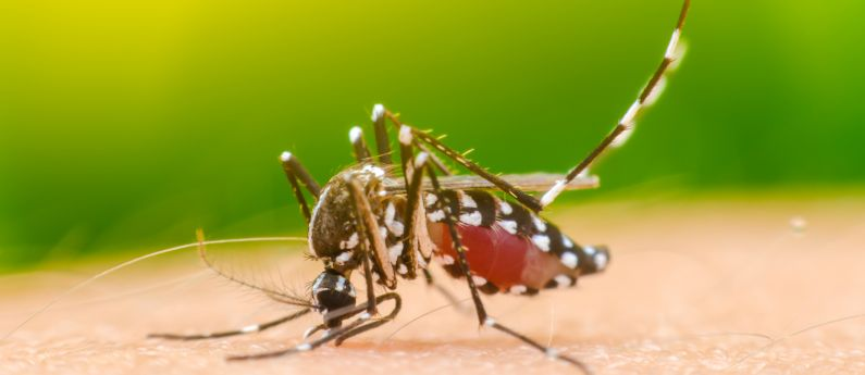 mosquito control in Loveland